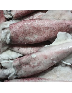 calamar mediano