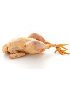 Pollastre de Pagès