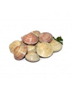 Cloïssa gallega (250 gr.)