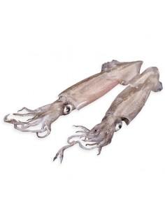 Calamar fresc