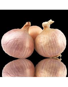 Cebolla Figueres