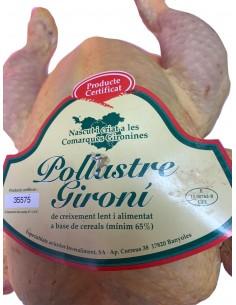 Pollastre Gironès